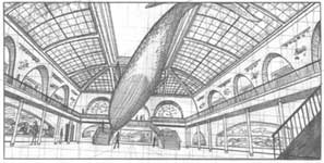 museum of natural history drawing